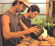 Old Potting Photo