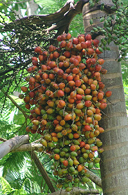 foxtail-seeds.jpg, 91 kB